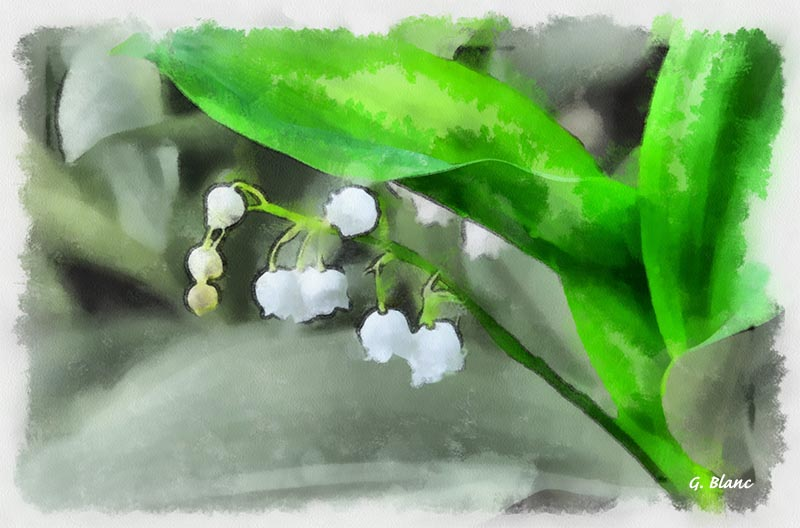 Fleurs_03