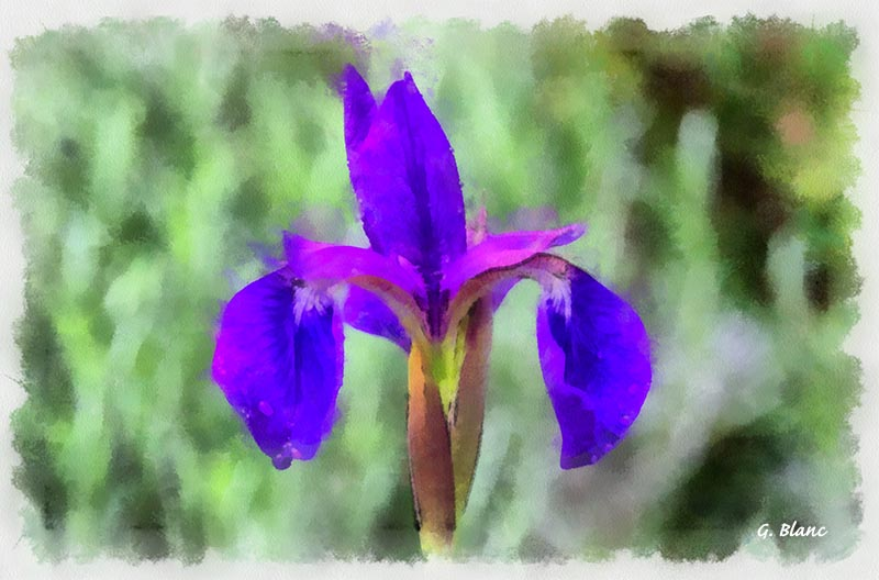 Fleurs_14